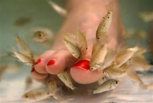 Fish pedicure the new wonda treatment trendette 39 s for A salon called fish