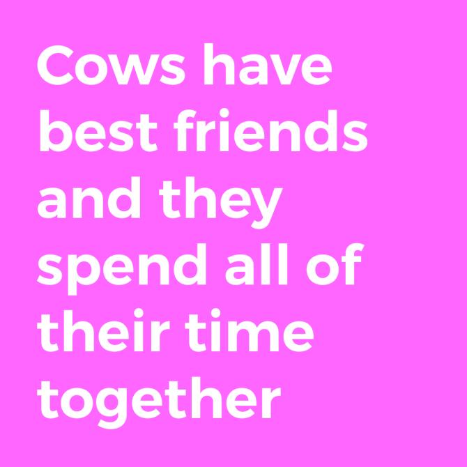 happy fact 1